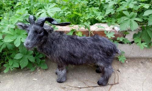 simulation black sheep model large 35x28cm goat ,polyethylene & furs toy model decoration gift t450(China (Mainland))