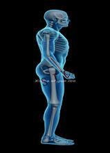 3D X-Ray Scanning Man Manusia Anatomi Retro Kraft Kertas Poster Rangka Sendi Organ Sistem Otot Biru Latar Belakang Dinding stiker(China)