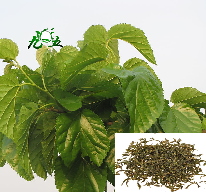 Wild Dried Mulberry Leaves Tea. Benefits diabetes, lung, liver, throat, lower blood pressure...  250g, Free Shipping!<br><br>Aliexpress