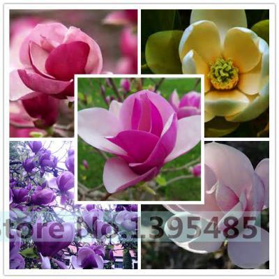 200/bag Mix Succulent seeds lotus Lithops Pseudotruncatella Bonsai plants Seeds for home & garden Flower pots planters