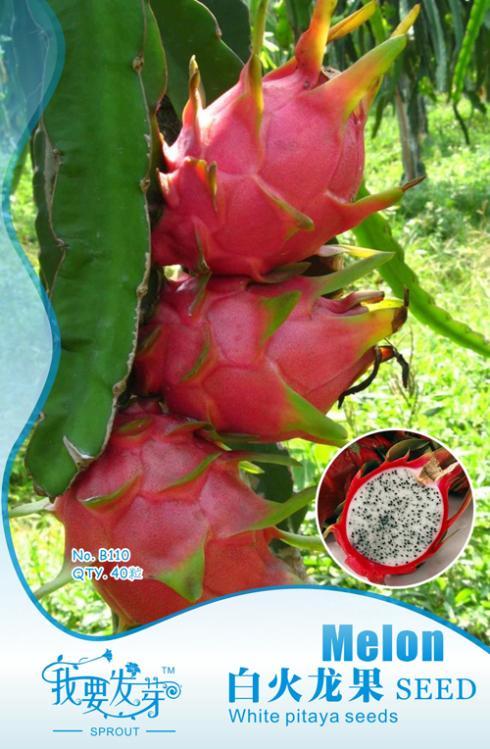 Fruit seeds white dragon fruit vegetable seeds pitaya Original Packing 40pcs/bag Home Garden DIY Free Shipping(China (Mainland))