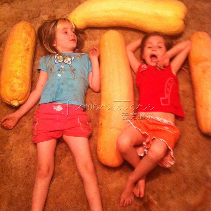 Free Shipping 20 Banana Squash Seeds Healty and tasty Vegetable Sponge Seed Healthy Green Food(China (Mainland))