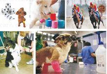 2.5 cm x 4.5 m vetflex, vendaje cohesivo veterinario vendaje de perro, gato, caballo vendaje(China (Mainland))