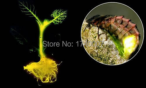 10pcs/bag light tree seeds, firefly light, rare bonsai seeds(China (Mainland))