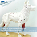 CMAM A05 Dog Acupuncture Model Animal Acupuncture Models for veterinarian s reference