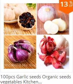 20 Aloe Seeds Mix – Excellent Houseplants succulent ALOE VERA SEED