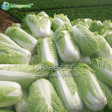 100PCS Chinese Delicious Cabbage Seeds Easy to Grow Nutritious Green Vegetable Seeds Brassica Pekinensis Plants Garden Supplies(China (Mainland))