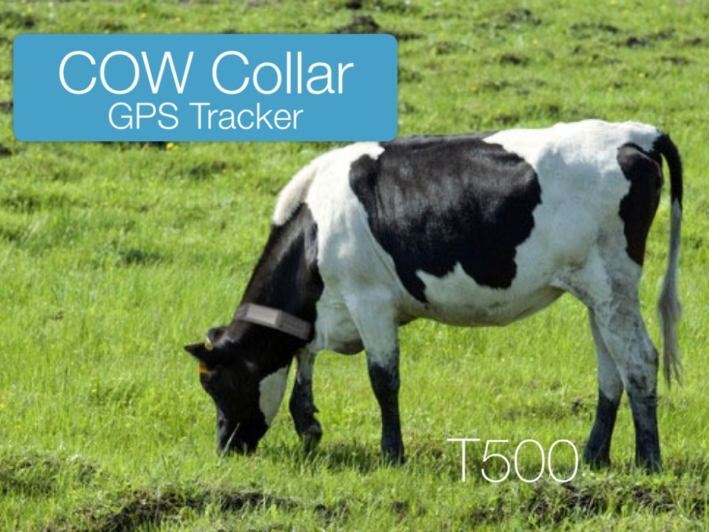 Cow Gps Tracker Collar Gps Tracker For Animals With Solar