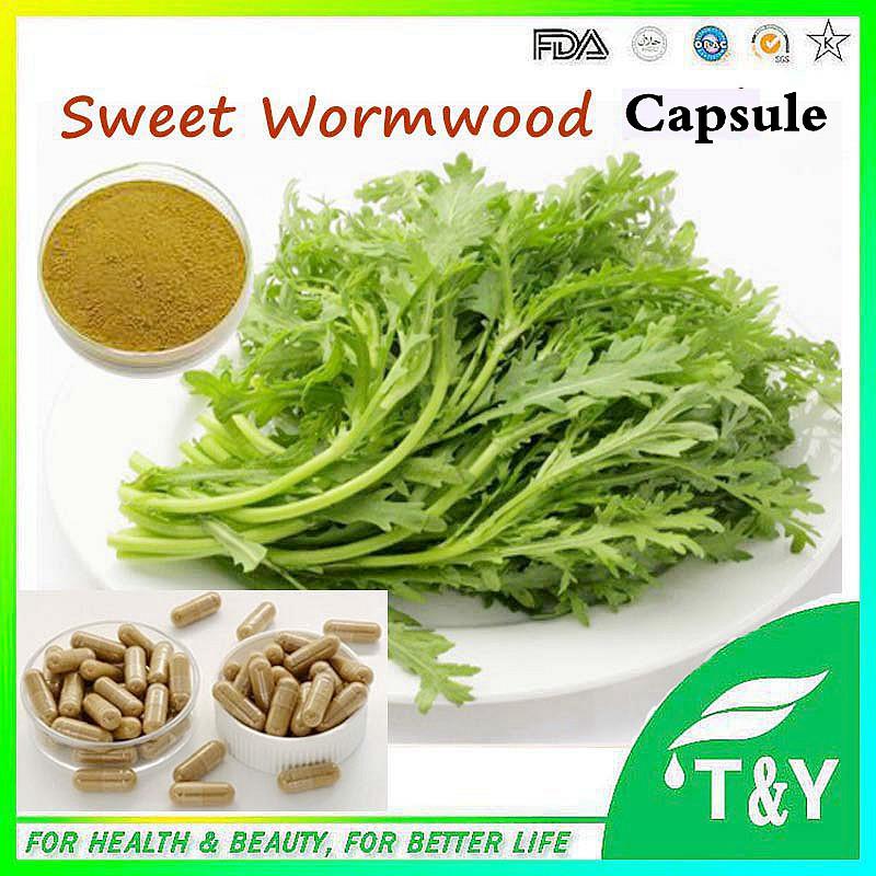 Top quality Sweet Wormwood Herb Extract/Sweet wormwood capsule 500mg*600pcs