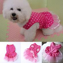 popular dress dog