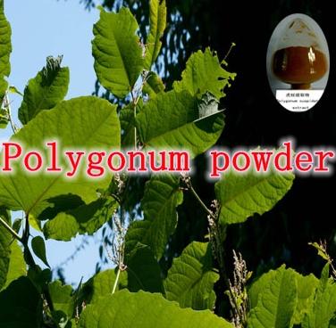Wild Fo-ti Powder * Black Been He Shou Wu Powder 500 g(China (Mainland))