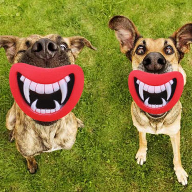 צעצוע לכלבים