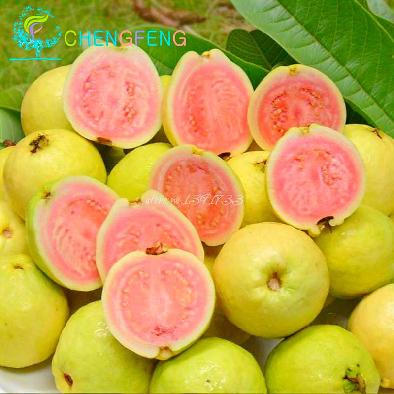 Thailand Fruit Wholesaler Email Mail: Achetez En Gros Fruits Goyave En Ligne à Des Grossistes