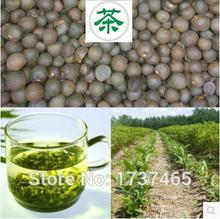 Buy 20pcs/lot Chinese Green Tea Tree Seeds Bonsai Plant DIY Tea Healthy Bonsai Tea Tree Home Garden Free Shipping#2016 for $1.52 in AliExpress store
