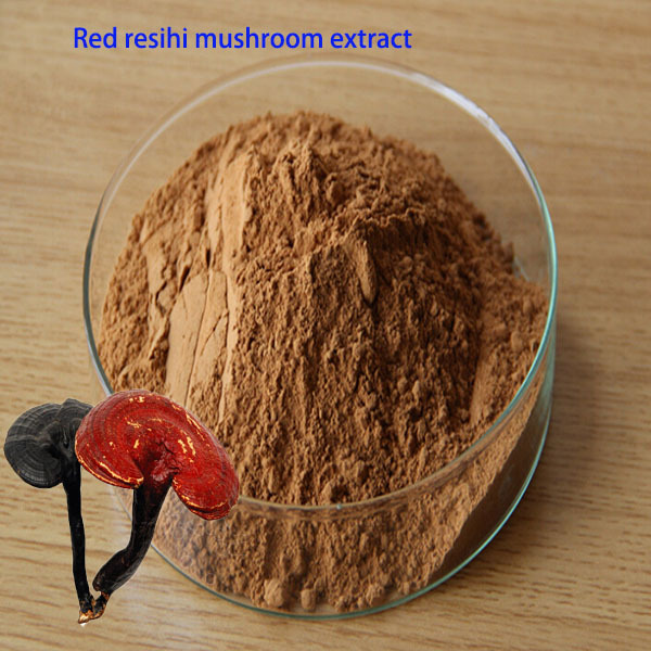 1kg bulk packing supply high quality Reishi mycelium extract ganoderma reishi mushroom extract(China (Mainland))