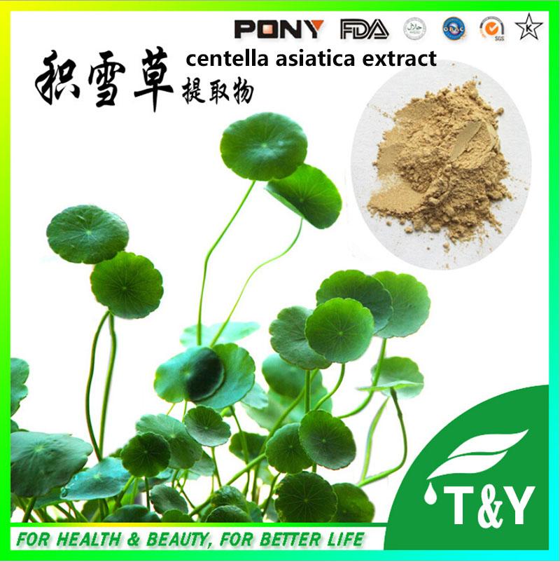 Supply Centella Asiatica Extract Asiaticoside/Gotu kola extract For Skin Whitening 600g/lot<br><br>Aliexpress