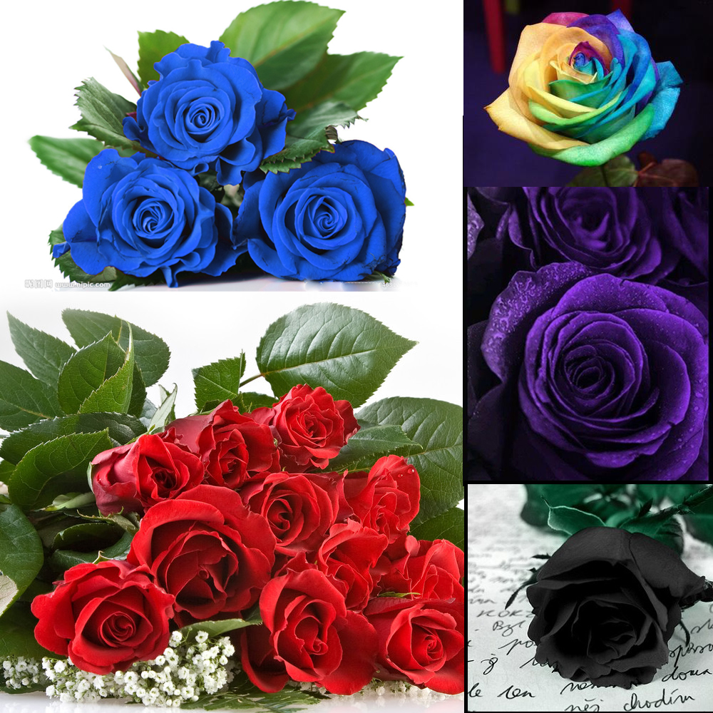High Quality New Rare 50pcs Multi Color Green Rose Flower Seeds Home