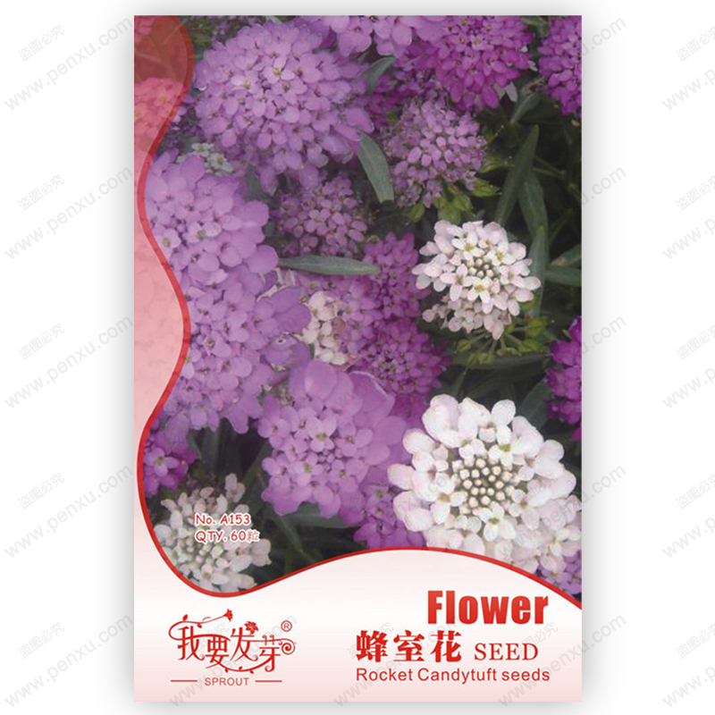 Original Pack 60 Seeds / Pack,Room flower bee seeds,Rocket Candytuft,Balcony flower bonsai, Patio plant seeds(China (Mainland))