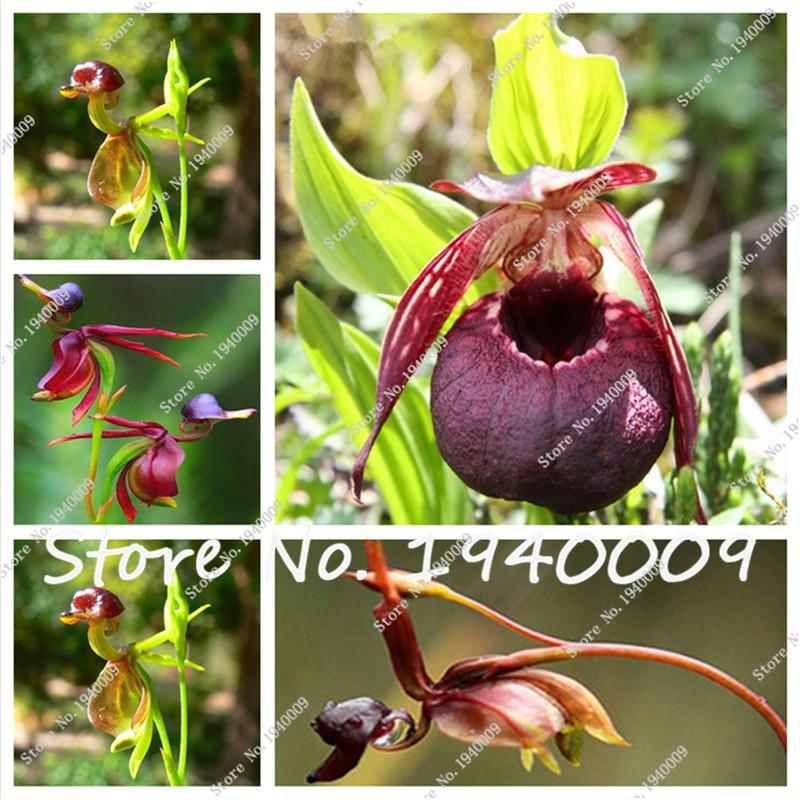 Orchidea vasi di fiori acquista a poco prezzo orchidea for Vendita semi fiori