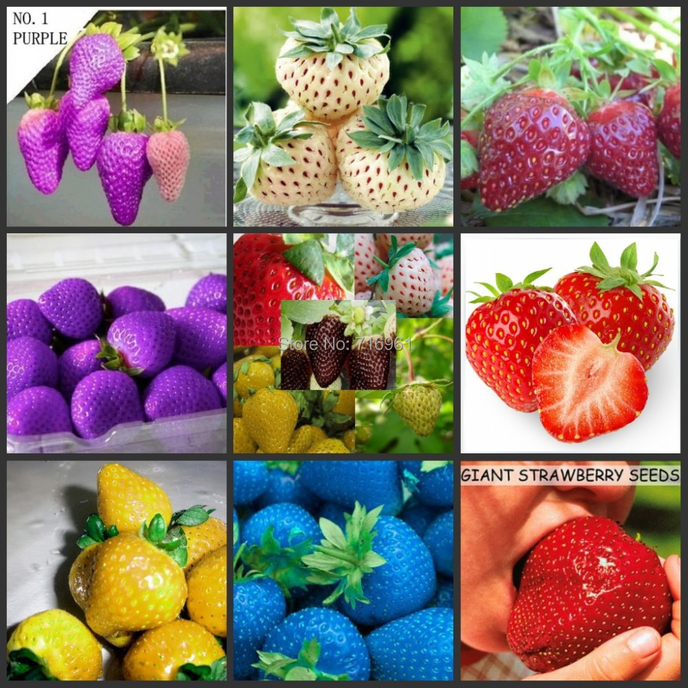 12 Kinds Strawberry Seeds (GREEN, WHITE, BLACK, RED, BLUE, GIANT, MINI, BONSAI, NORMAL RED, PINEBERRY STRAWBERRY)(China (Mainland))