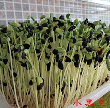 Free shipping/Total 200g,50g/pack,4 pack different Variety(Black,green,yellow,red beans) Sprout seeds. vegetables seed.bonsai(China (Mainland))
