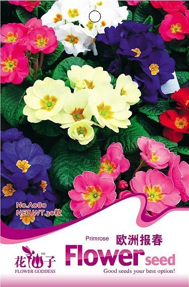 Flower seeds oxlip 30 PCS / bag Original packaging(China (Mainland))