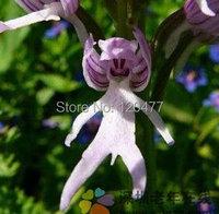 Карликовое дерево 25 /,  Cucumis sativus