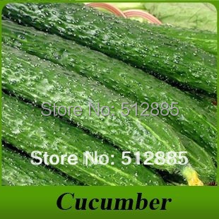 Cucumber seeds free shipping, 20 pcs.