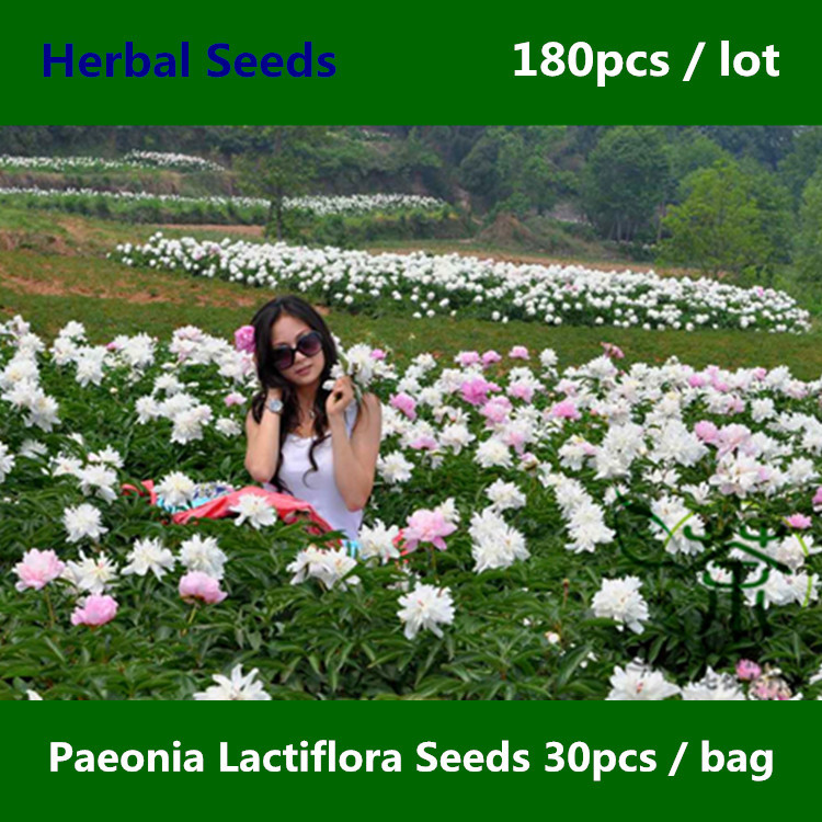 Flowering Plant Paeonia Lactiflora Seeds 180pcs, Beautifying Common Garden Peony Seeds, Herbaceous Perennial Chinese Peony Seeds(China (Mainland))