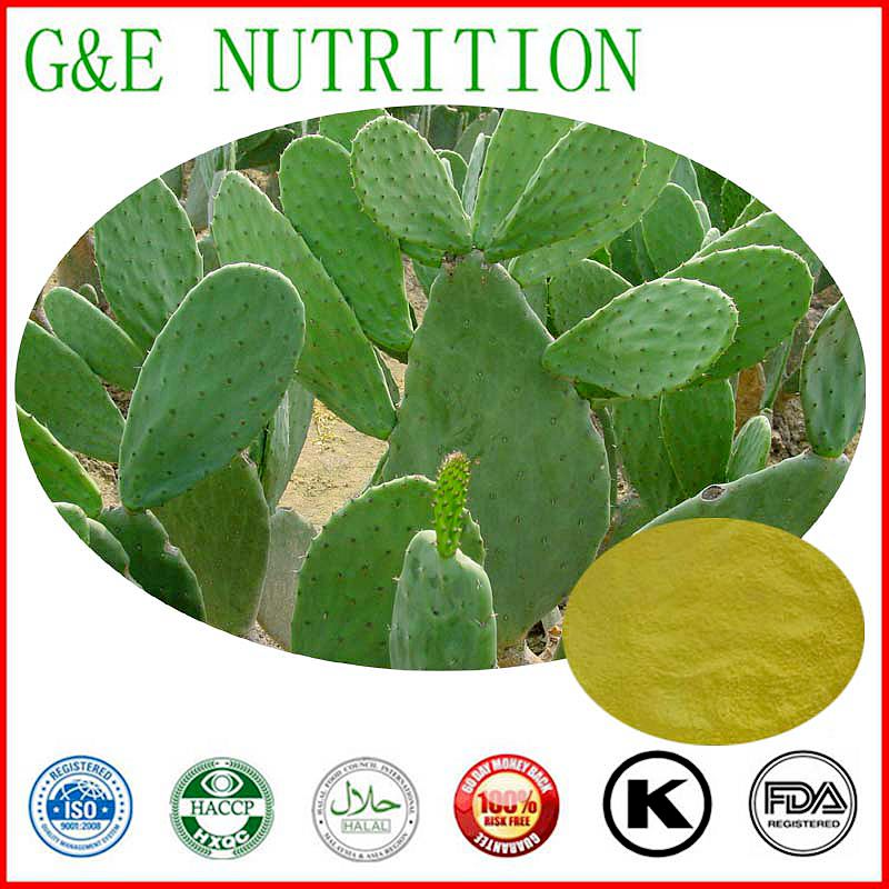 Natural  Cactus Extract ,High quality Cactus Extract powder 600G/lot<br><br>Aliexpress