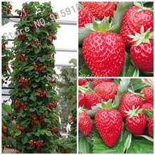 200pcs Japanese Hokowase Strawberry (Fragaria Hokowase) Seeds Indoor Outdoor Plant