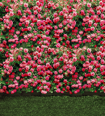 300*600cm(10ft*20ft) Lawn baby Flowers photography backdrops Bright<br><br>Aliexpress
