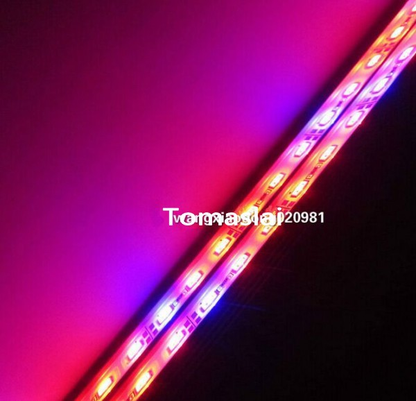 50pcs 1m 72 * SMD 5630 LED Grow Light Red Blue 5:1 waterproof led Bar Light Strips IP68 For Hydroponic Plant Flowers Vegatables<br><br>Aliexpress