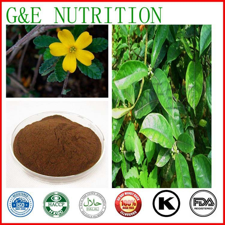 Herbal Supplements Natural Damiana Leaf Extract Manufacturer