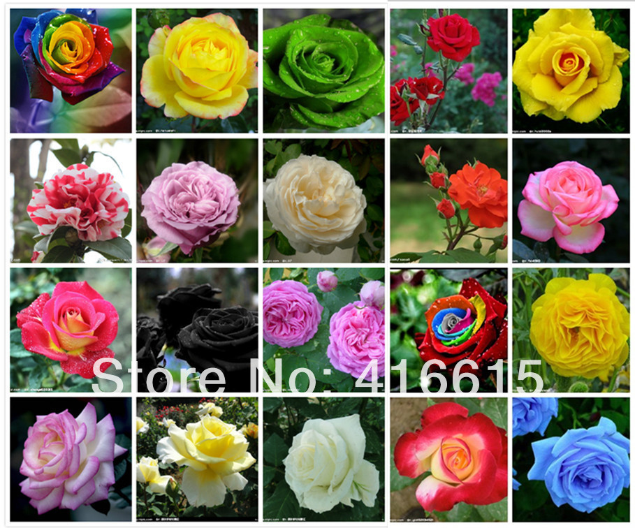20 COLORS 1000 ROSE SEEDS (50 SEEDS EACH COLOR) WITH FULLY SEALED BAG,Flower Seeds,Rainbow Rose,DIY Bonsai(China (Mainland))