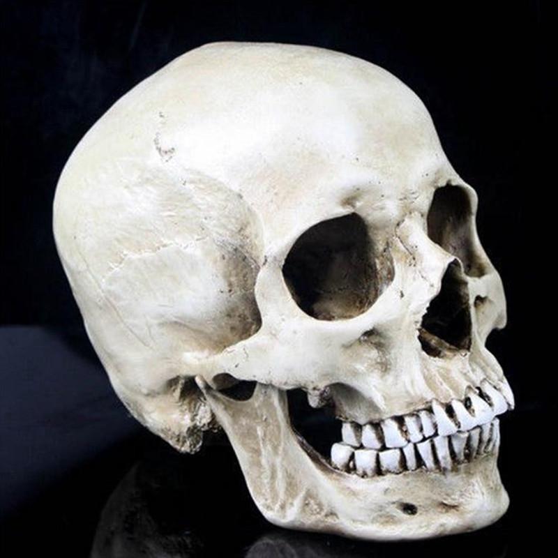 Aliexpress Com Buy P Flame High Quality Human Skull