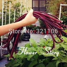 Free Shipping 20 Long Pole Bean Seeds, Purple color, Asparagus Beans Cowpea Seeds, rare color, good taste Heirloom Vegetable(China (Mainland))