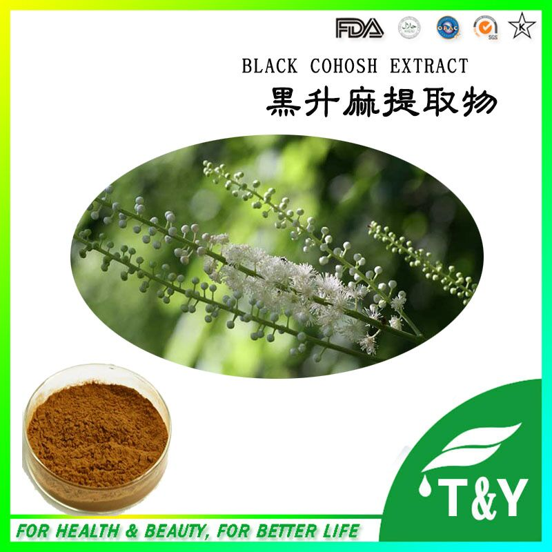 SO fatory supply Black Cohosh extract Actaea racemosa extract Cimicifuga racemosa extract 900g/lot(China (Mainland))