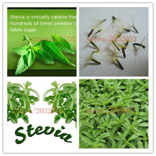 200 real stevia seeds chinese herb Stevia Green Herb, Stevia rebaudiana Semillas for Garden Planting(China (Mainland))