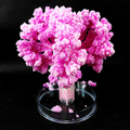 Pink Big Magic Growing Paper Sakura Desktop Cherry Blossom Tree Magical Grow Trees Arbre Magique Christmas