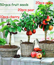 3 kind fruit, bonsai fruit tree seeds, vegetable and fruit seeds cherry apple pear total 50+ seeds Non-GMO plant home garden(China (Mainland))