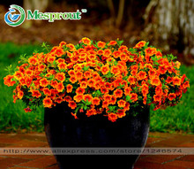 24 Colors Petunia seeds, Charming Petunia Flower seeds, Petunia potted seed, Bonsai balcony flower - 100 pcs/bag(China (Mainland))