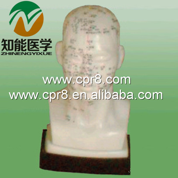 BIX-Y1020 Life-size head acupuncture model Australia freight free AU freight free Japan freight free JP freight free<br>