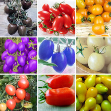 6 Kinds Of Cherry Tomatoes Seed Balcony Fruits Seed Vegetables Potted Bonsai Potted Plant Tomatoes Seeds A Package 100 Pcs(China (Mainland))