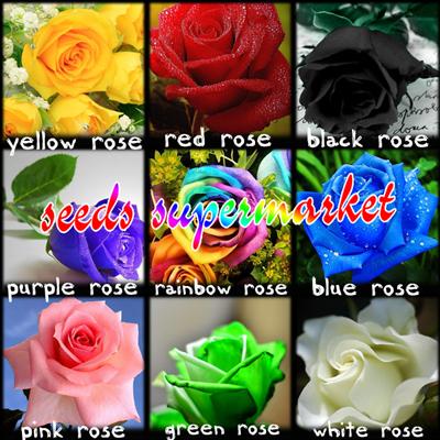 400 pcs seeds rare holland rainbow rose flower home garden for Holland rainbow rose seeds