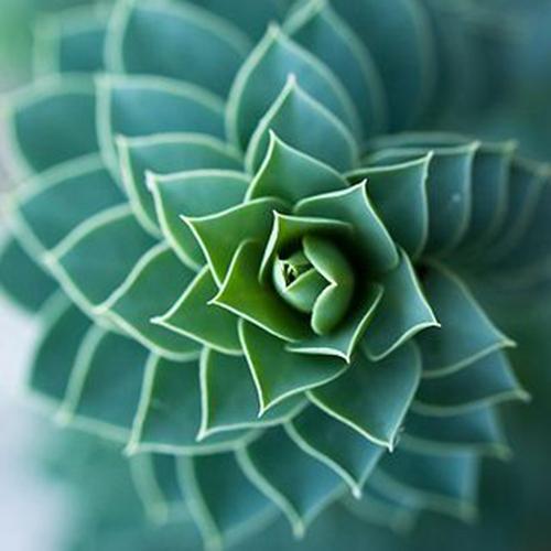 Free Shipping 1 Bag Aloe Ornamental /Medicinal Mix 200 Succulent Seeds Vera Rich flavor(China (Mainland))