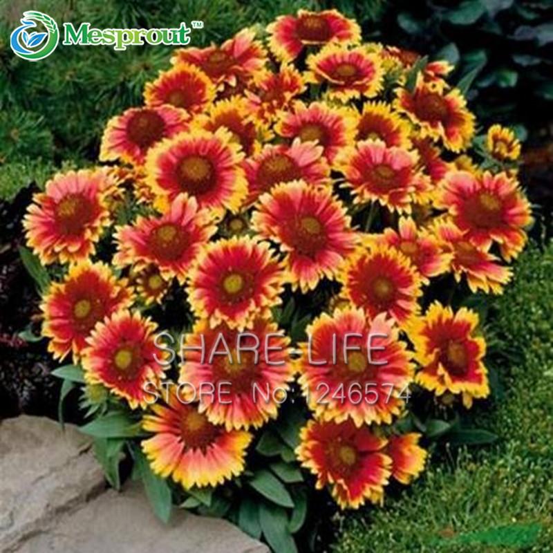 Цветы многолетники красивые цветы