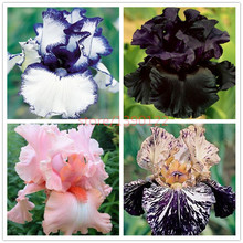 50pcs rare iris ,iris seeds,bonsai flower seeds,24 colours, Heirloom Iris Tectorum Perennial Flower Seeds, plant for home garden(China (Mainland))