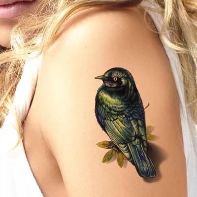 Peace Swallow Bird Ta