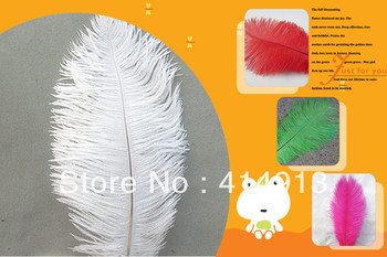 "wholesale FREE SHIPPING 200pcs/lot 8""-10:Ostrich Feather Plume"